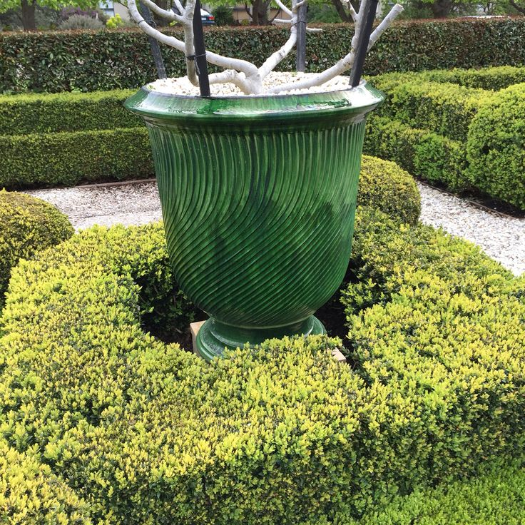 Close up details of the buxus hedging surrounding my Anduze urns ....