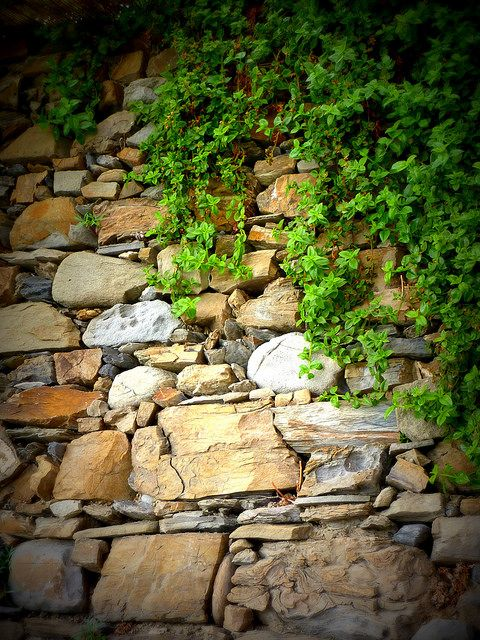 Rock wall - Manarola, Cinque Terre, Italy