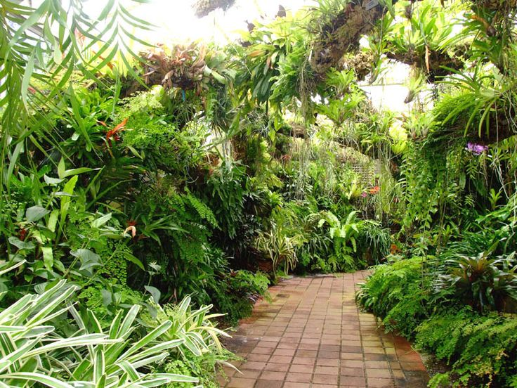 17 best images about tropical garden on pinterest