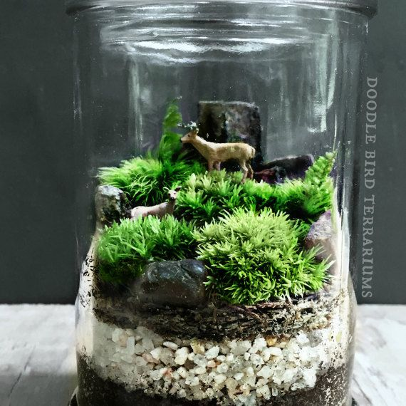 581 best terrariums and miniature gardening images on pinterest plants mini gardens and. Black Bedroom Furniture Sets. Home Design Ideas