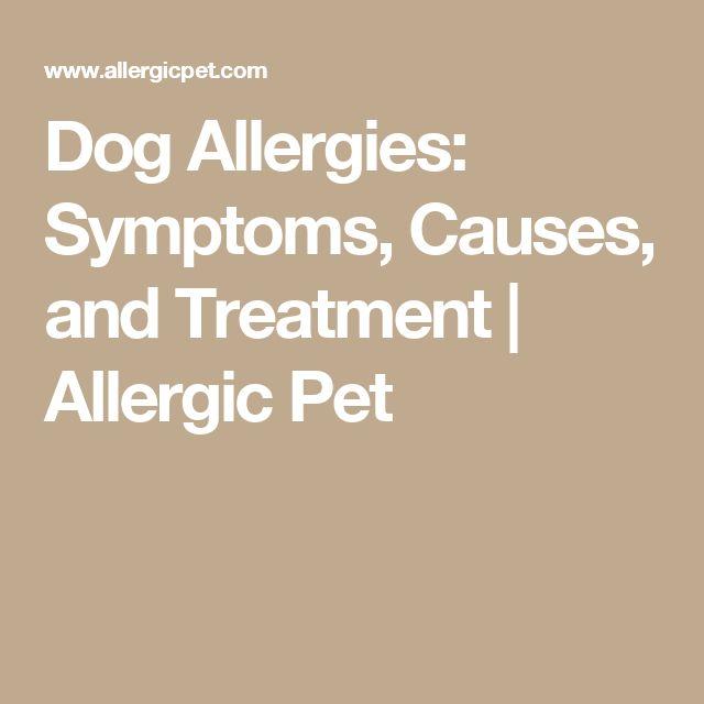 best 25 dog allergy symptoms ideas on pinterest