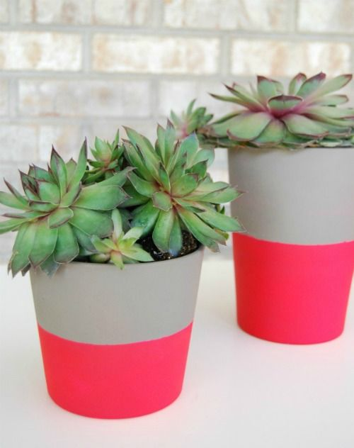 succulents in neon flower pots