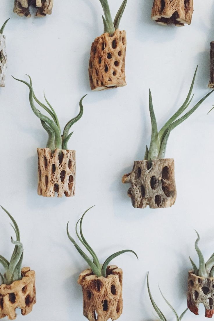 A bunch of air plants, just hanging out.