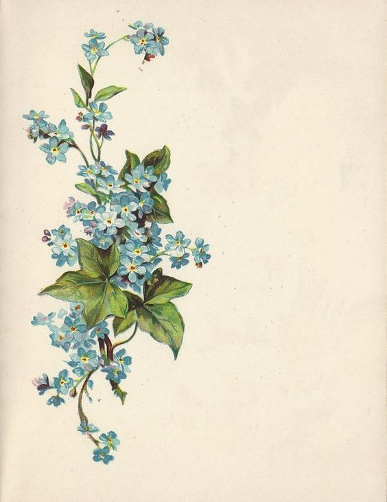 Forget-me-nots & English ivy tattoo--> but for me, geraniums