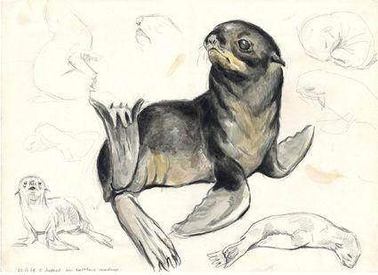 В.М. Смирин. Новорожденный детеныш северного морского котика, о. Медный, 1976