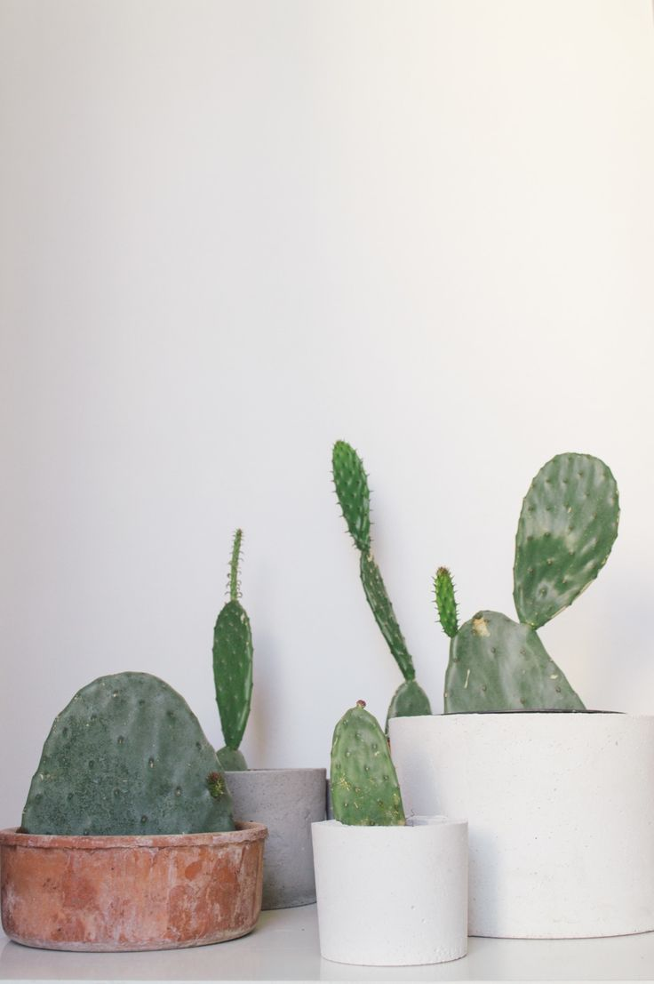 Prickly Pears obssesion //  #concrete #concreteplanters #pricklypears