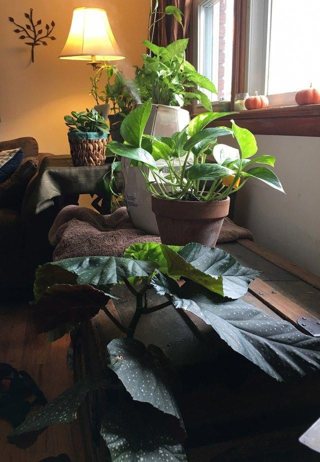 4 Tips For Winter Gardening Indoors Winter Gardening Ideas