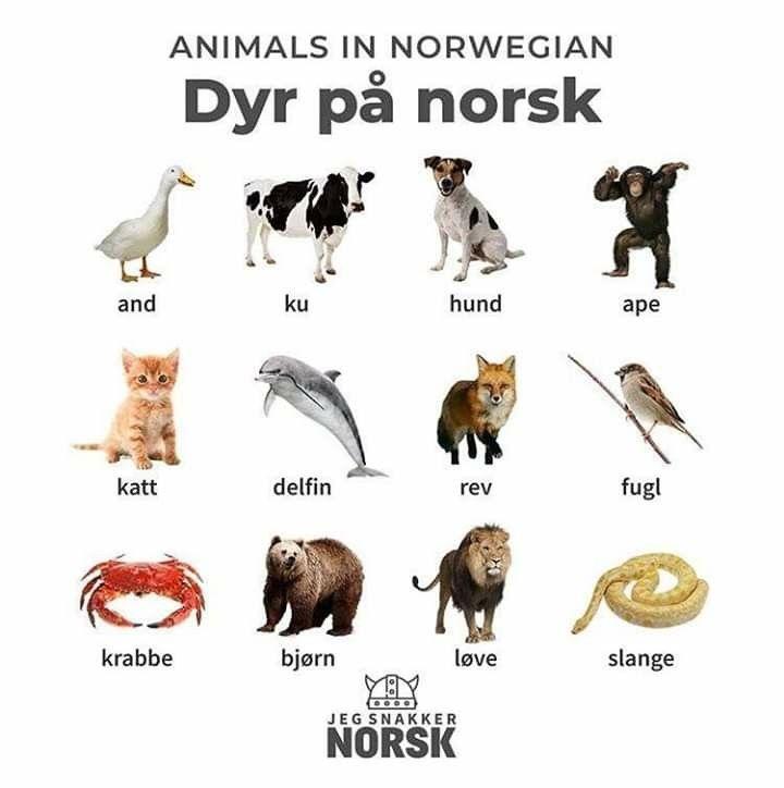 Norwegian Animal Names Norway Language Norwegian Words Norwegian