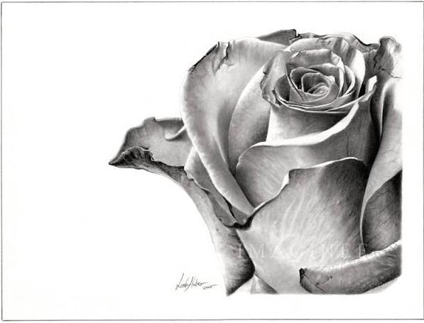Pencil art on a white background with white highlights adds contrast and creates drama