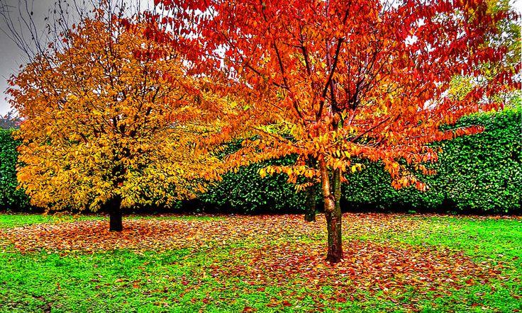 Magical autumn circles by Francesco Cetta on 500px