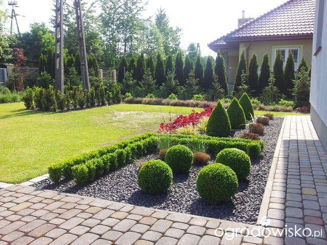 Moja codzienność - ogród Oli - strona 1445 - Forum ogrodnicze - Ogrodowisko