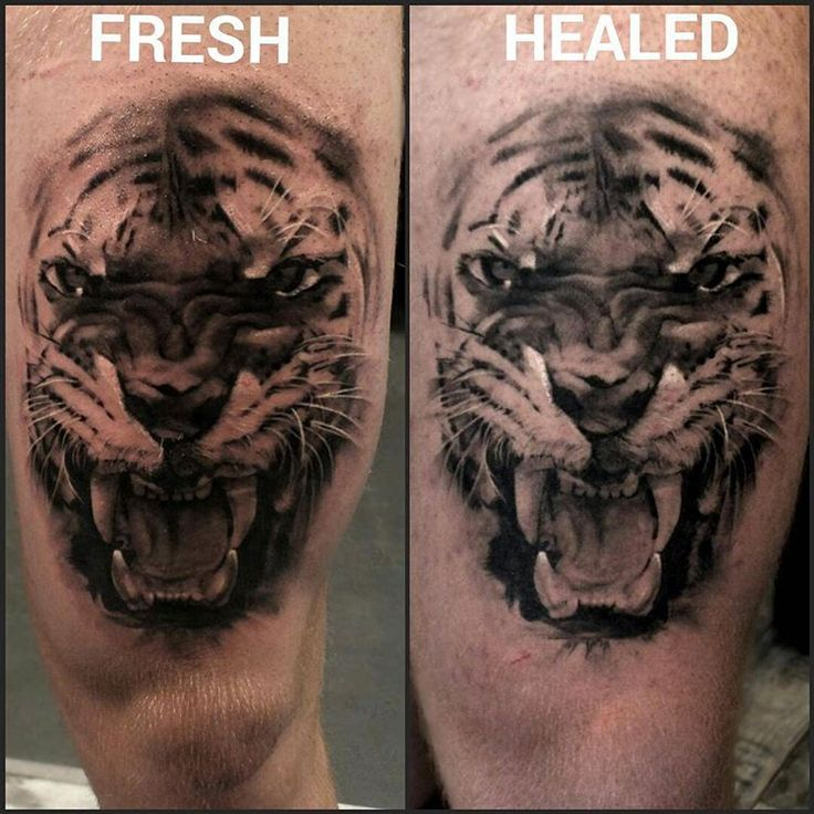 When Is Tattoo Healed: Here Is A Fresh Vs Healed Pic Of A Tiger I Tattooed A Few