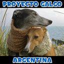 Petición · Prohibición de las carreras de galgos @DeLaSotaOk @gobdecordoba · Change.org