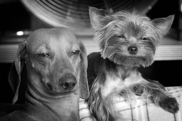 """""""Make the face! Make the face! We'll look so cute they won't even care about what we did to the shoes!"""" LolFunniest Quotes, Funny Pics, Funny Dogs, Funny Pictures, Funny Stuff, Funny Animal, Funnystuff, Animal Funny, Funny Memes"""