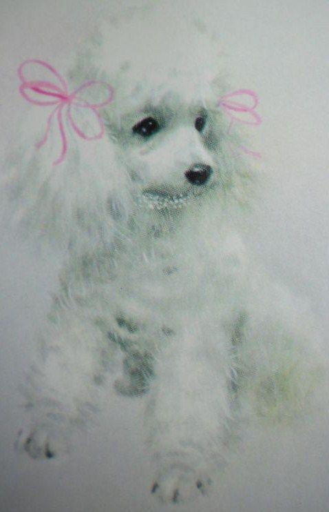 Vintage White Poodle Illustration