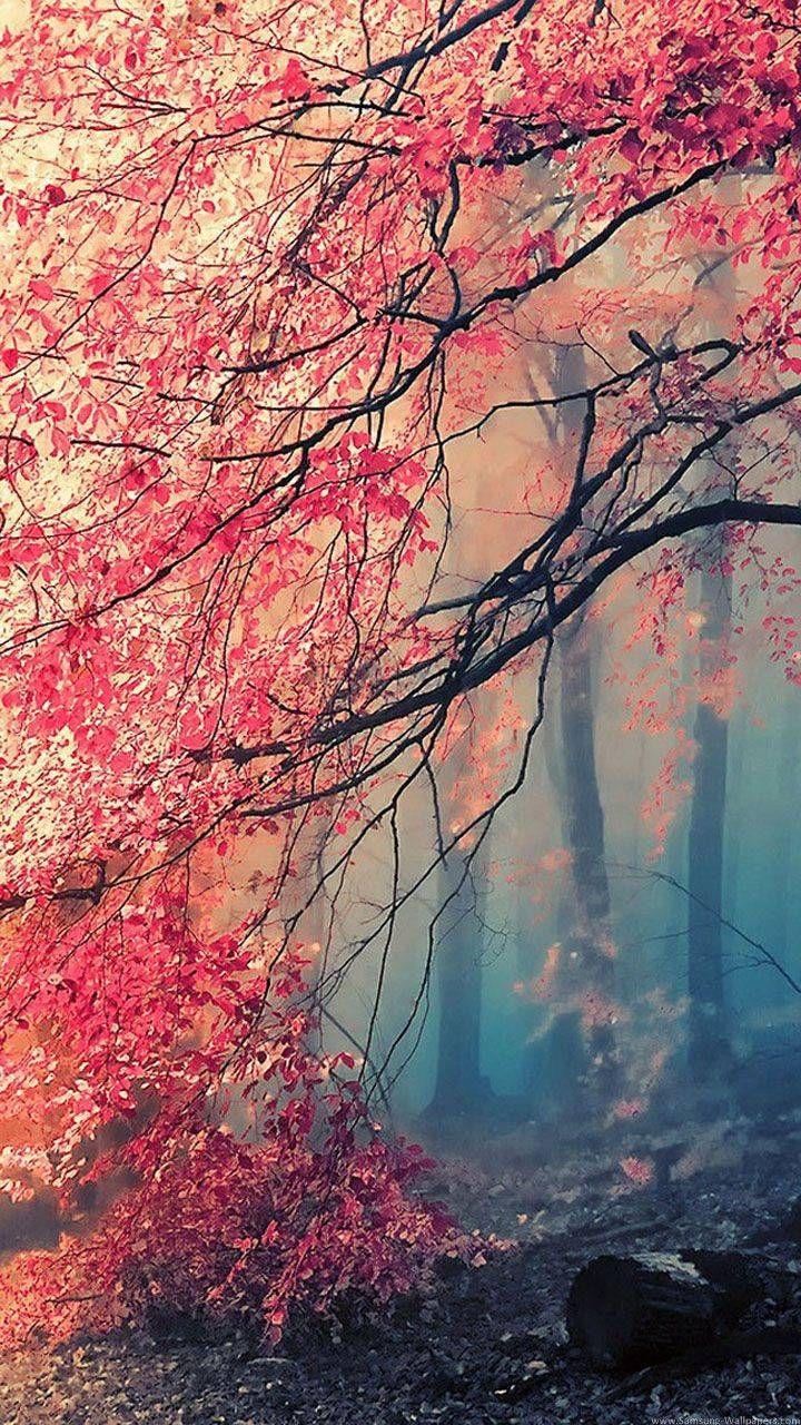 Beautiful Autumn Image In 2020 Nature Iphone Wallpaper Samsung Wallpaper Hd Nature Wallpapers
