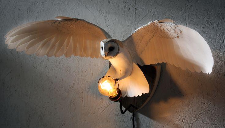 barn owl glow.jpg
