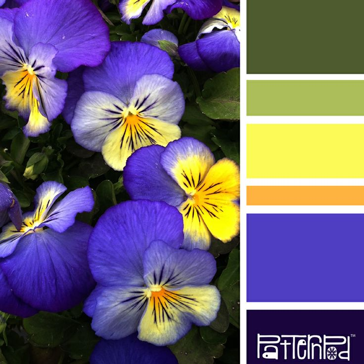 Color Palette: Purple, Blue, Yellow, Green.  If you like our color inspiration sign up for our monthly trend letter - click the image for the link.
