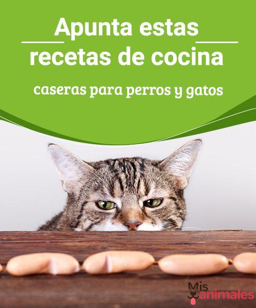 Apunta estas recetas de cocina para perros y gatos  Una alimentación nutritiva es clave para que las mascotas se desarrollen de manera saludable por eso compartimos recetas de cocina para perros y gatos