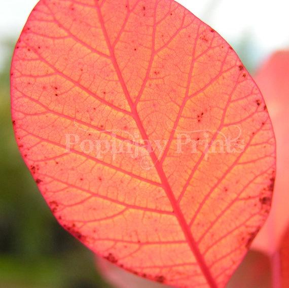 Red leaf by PopinjayPrints on Etsy, $17.00