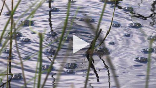 アラスカの湖から放出されるメタンが、地球温暖化の悪循環に拍車をかけている。