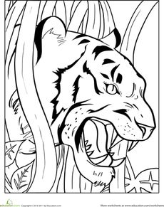 163 best coloring pages images on pinterest | coloring books ... - Coloring Pages Tigers Lions
