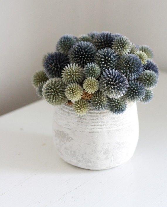 dried echinops: White Vase, Blue, Colors, Thistles, Green, Bouquets, Plants, Floral Arrangements, Dry Flowers