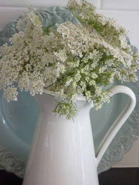 Queen Anne's Lace. Two of my faves-pretty pitcher and Queen Anne's lace!
