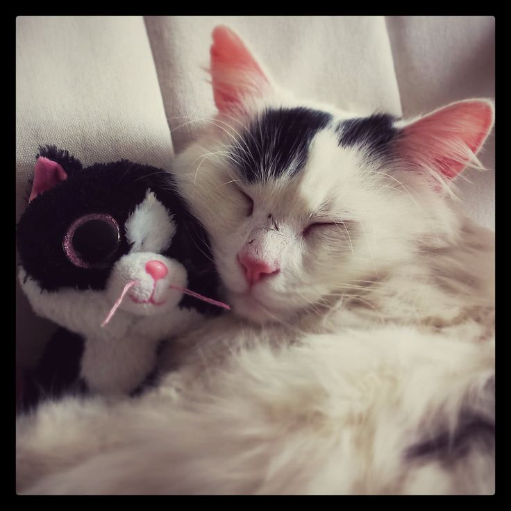 Cat with Kitty