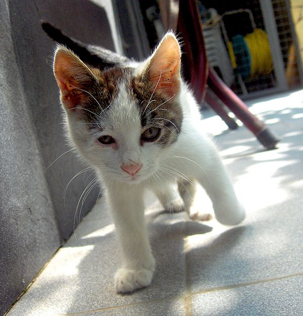 """What Is """"Fading Kitten Syndrome"""" and Why Do So Many Foster Kittens Die from It? 