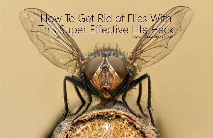 25 Best Ideas About Get Rid Of Flies On Pinterest Diy Mosquito Repellent Repel Flies And
