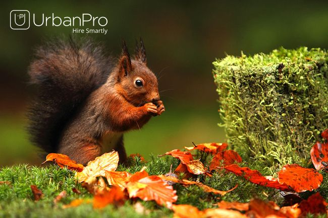 Find the best Wildlife Photography Classes in your locality @ https://www.urbanpro.com/wildlife-photography-classes?_r=offpage