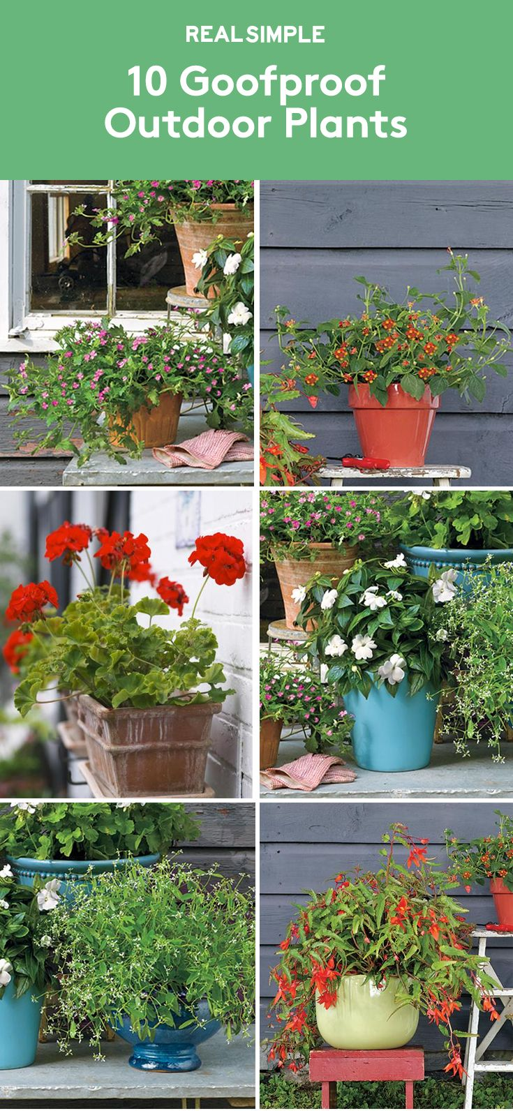 10 Goofproof Outdoor Plants   If tending to your flora is leaving you feeling wilted, take heart: These plants are almost impossible to kill.