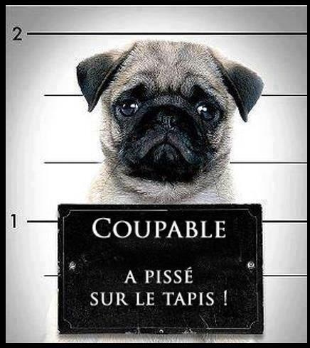 #Animaux #Animals #Insolite
