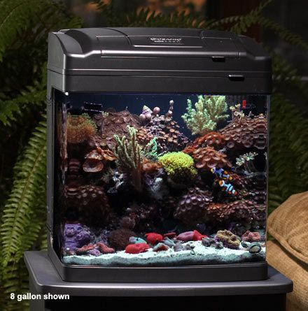 122 best images about saltwater aquarium here fishy fishy for Bio cube fish tank
