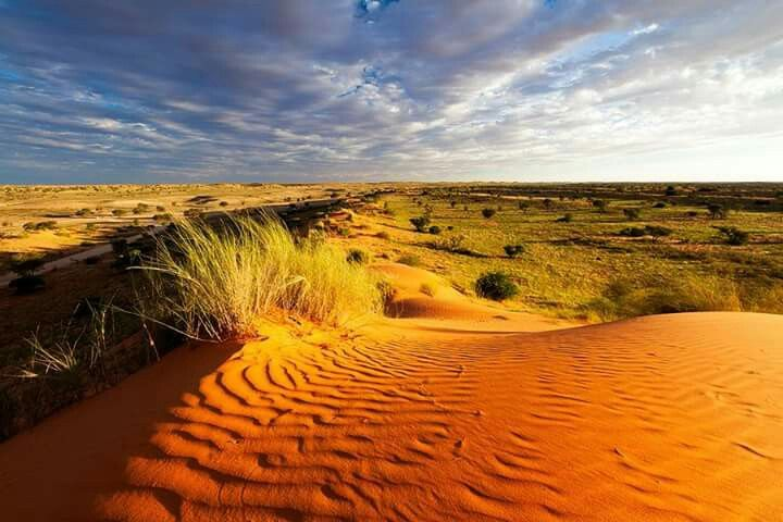 Places of interest to visit in South Africa and Botswana - Kgalagadi Transfrontier Park - While on a South Arica safari, you'll hardly find a more fascinating region than the Kgalagadi… The dry rivers beds from the Nossob River and Auob River are always empty unless a thunderstorm causes them to flow temporarily.... #wildlife #southafrica #botswana #photosafari #tourism #extremefrontiers #bush #adventure #holiday #vacation #safari #tourist #travel