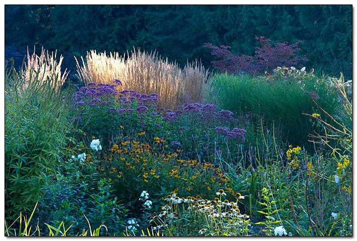 Excellent article about mixing drought-tolerant perennials with ornamental grasses