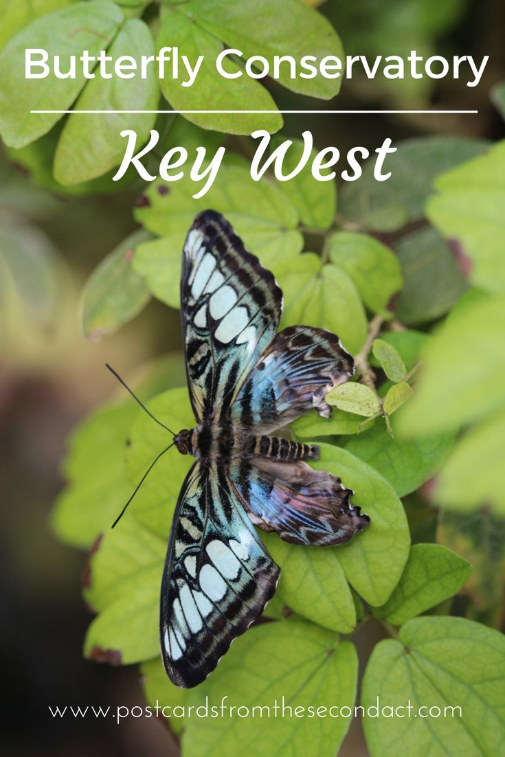 Explore the calming zen of Key West's Butterfly and Nature Conservatory