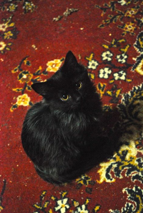 Cute Black Kitty~