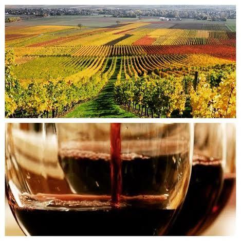 Primeurs Bordeaux 2014 Winelover, bestwines, tasting, vineyard