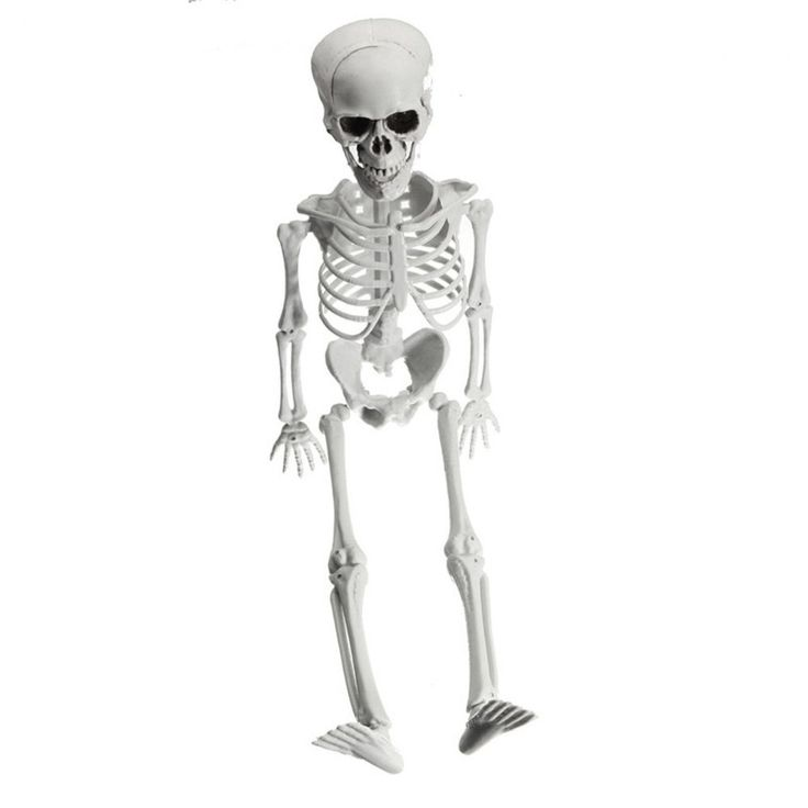Posable Skeleton With Movable Joints For Halloween Party Yard Scary Decoration #Unbranded