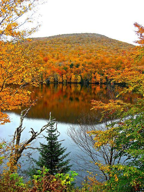 Autumn leaves in Cape Breton, Nova Scotia, Canada