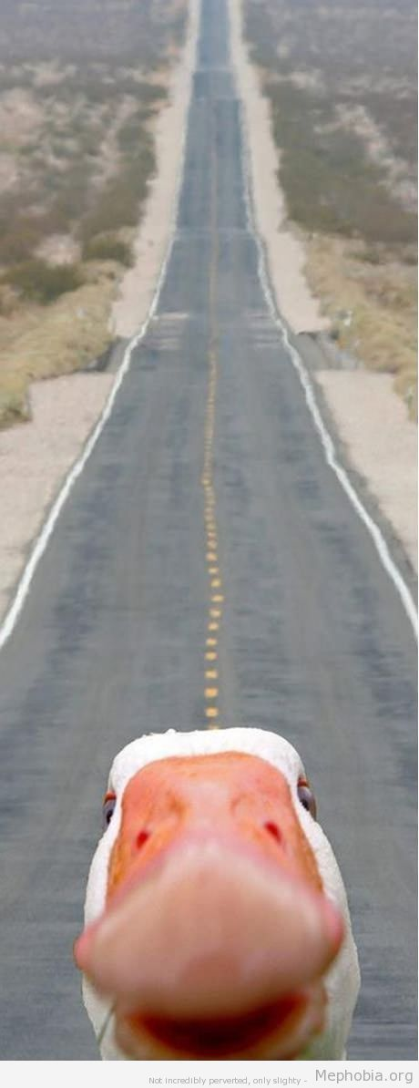 The long road..........