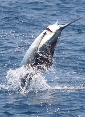 44 best images about destination miami fl on pinterest for Reward fishing fleet
