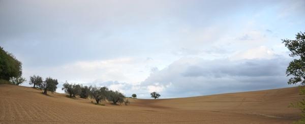 dune arate