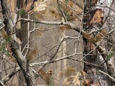 Realtree Camo Wallpaper | Realtree Camo - 1280 / 1024 Wallpaper for Kempers room