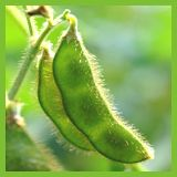 Isoflavones are naturally occurring plant compounds that are found in many foods, but the best known source is the soy bean. These soy isoflavones are responsible for many health benefits which include protection against breast cancer, prostate cancer, me