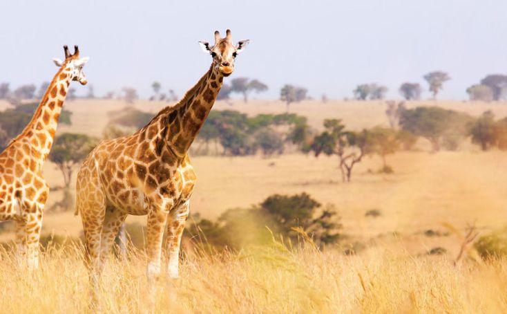 #Croisière : Le Cap en Afrique du Sud et la Namibie avec Oceania Cruises https://seagnature.info/2iSVG36  Offre Spéciale Seagnature valable jusqu'au 31 janvier 2017  #luxe #vacances #voyage