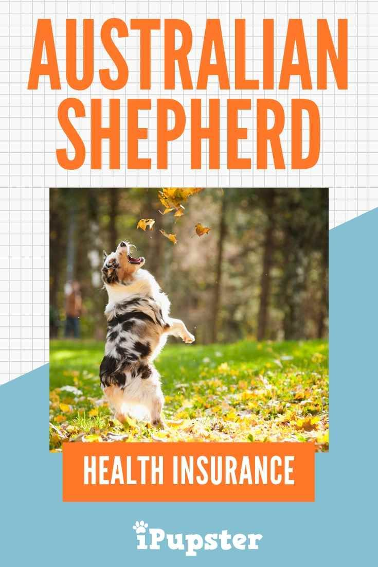 In Search For The Best Affordable Australian Shepherd Dog