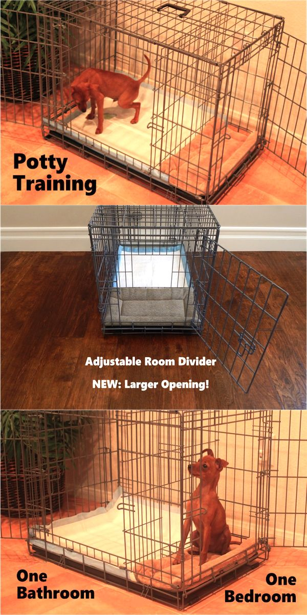 25 best ideas about indoor dog potty on pinterest dog